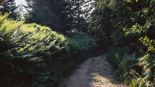Hiking Epinal - Vosges Forest - Hiking guide