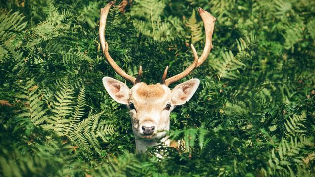 Deer's slab