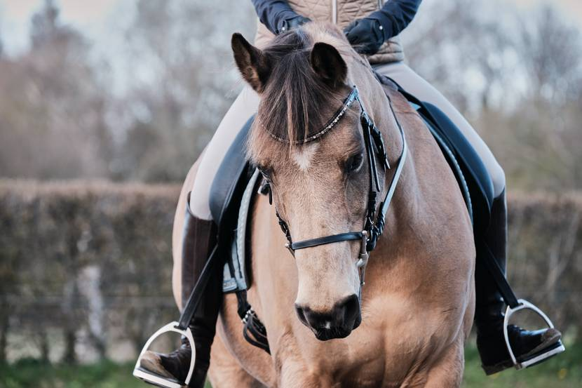Horse riding in the Vosges - Horse riding - Epinal riding centre