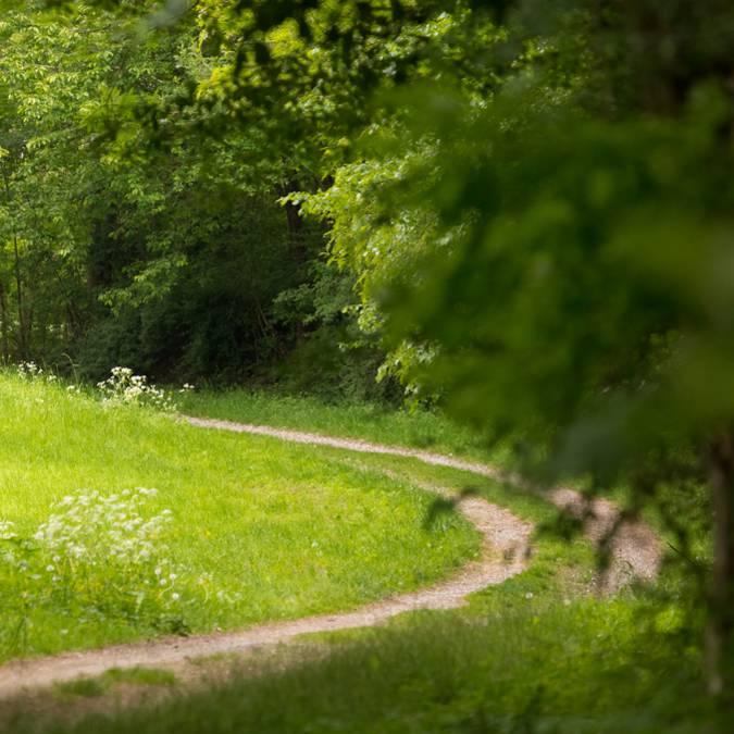Horseback riding - Horseback riding Vosges - Horseback riding - Landscape